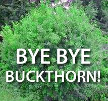 bye_buckthorn